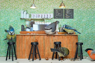 PIC MY MAGNE KLANN AND LARS AURTANDE / CATERS NEWS (PICTURED: PIIPSHOW BIRD FEEDER CAFE) - A European broadcaster is offering a reality TV show with a unique twist - a live stream of BIRDS and SQUIRRELS hanging out in a feeder themed to look like a coffee shop. The wacky show, named Piipshow, is the creation of photographer Magne Klann and model maker Lars Aurtrade, and is currently being produced by Norwegian broadcaster NRK. The show will air until June 2014, with the best action usually taking place during daylight hours. Fans can watch live via NRK's website. Ever changing clientele in the cafe include excitable birds as nuthatches, bullfinches and tits. Petty squirrels also pop by, trying their best to steal the birds food. SEE CATERS COPY/CATERSNEWSAGENCY_1620.01/Credit:M. Klann/L.Aurtande/Cater/SIPA/1404101704